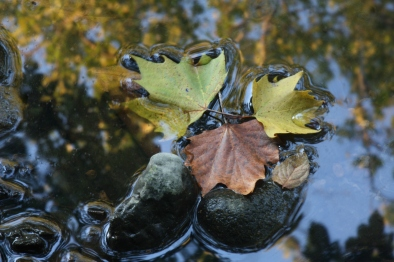 2013-11-19 - Its Leaf Does Not Wither (IMG_5174)