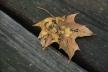 2013-11-22 - We All Fade Like a Leaf (IMG_0485)