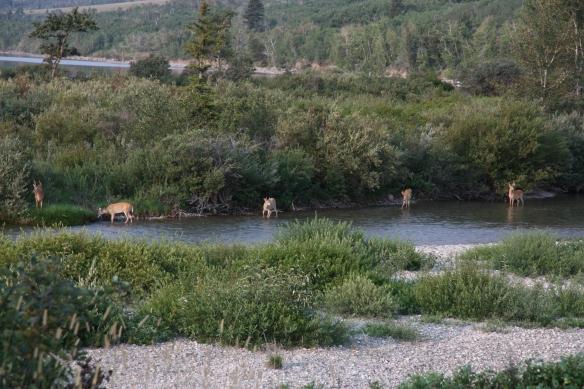 2013-11-27 - As a Deer Pants for Flowing Streams (IMG_8536)