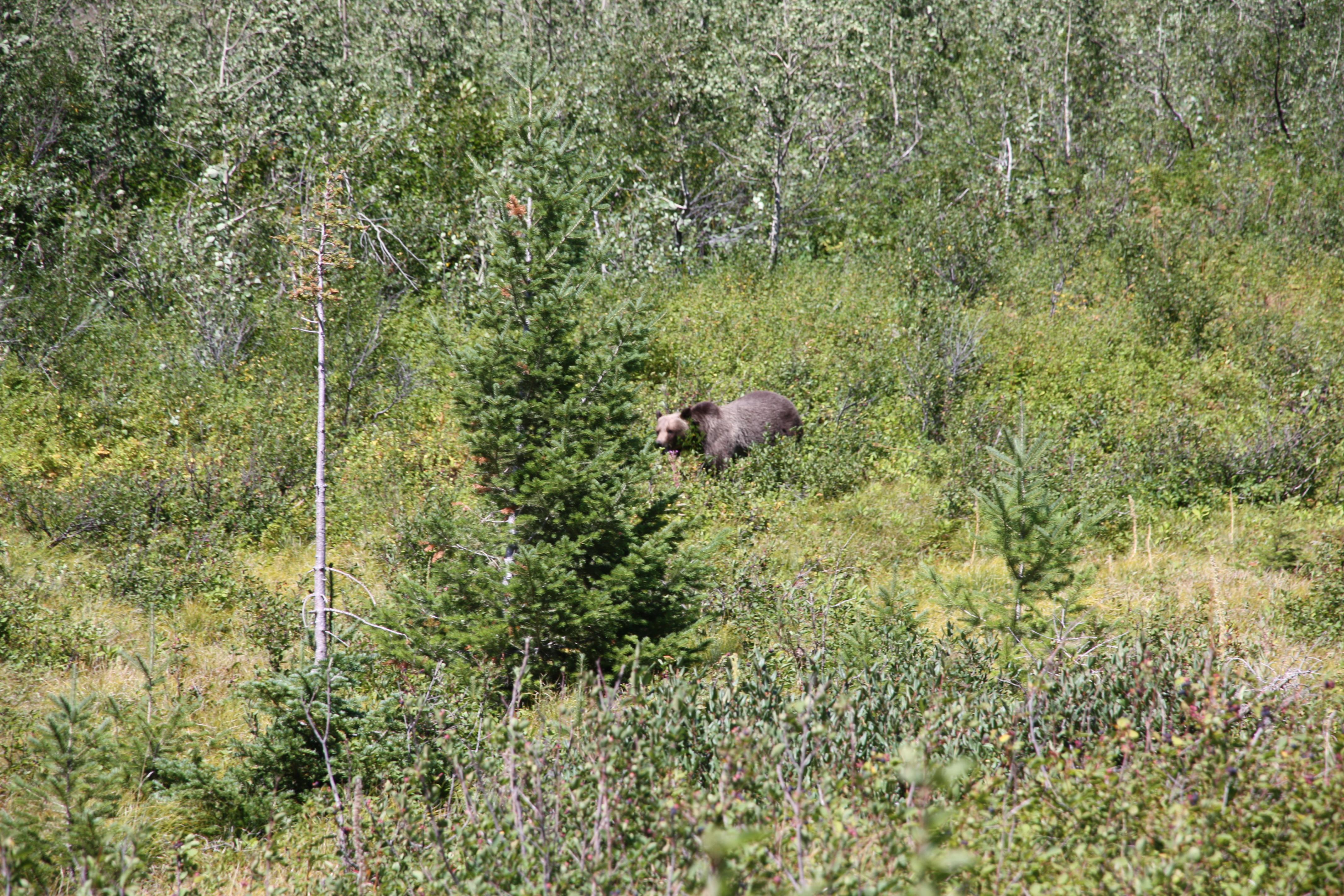 2013-12-09 - The Bear Shall Graze (IMG_8271)
