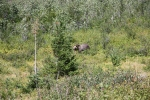 2013-12-09 - The Bear Shall Graze (IMG_8271)