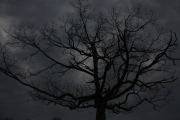 2013-12-16 - He Has Delivered Us from the Domain of Darkness (IMG_0656)