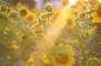 2014-01-27 - The Light of Men (IMG_2077)