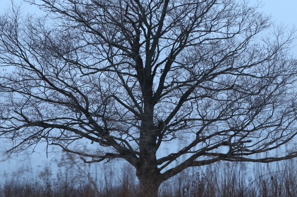 2014-02-02 - There Is One (IMG_0558)